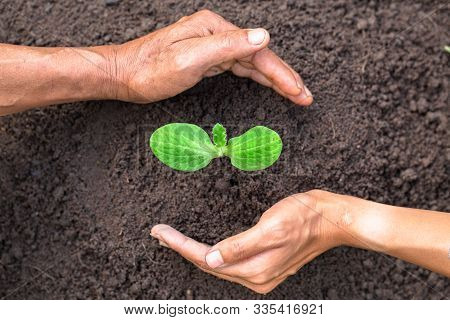 Father And Daughter Hands. Help Each Other Protect The Growing Seedlings From Fertile Soil.concept O