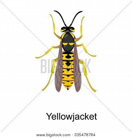 Hornet Vector Icon.cartoon Vector Icon Isolated On White Background Hornet.