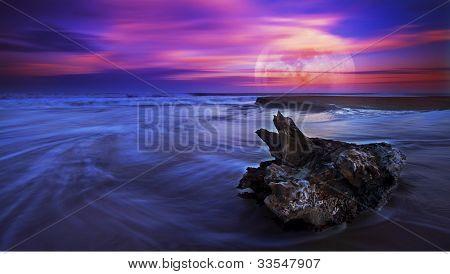 Drift wood at sunset on sandy beach