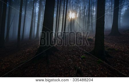 Dark Foggy Forest In Black And White