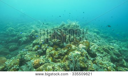 Reef Fish On The Liberty Wreck At Tulamben On Bali