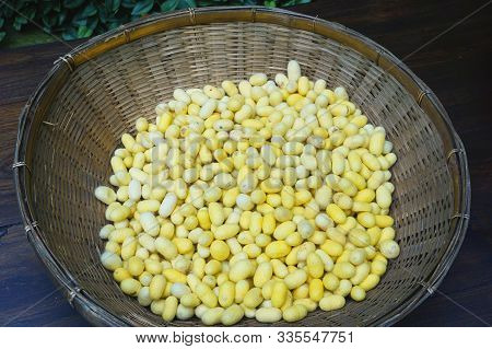 Handmade Bamboo Basket Filled With Natural Unbleached Yellow Silkworm Cocoons At A Craft Market In R