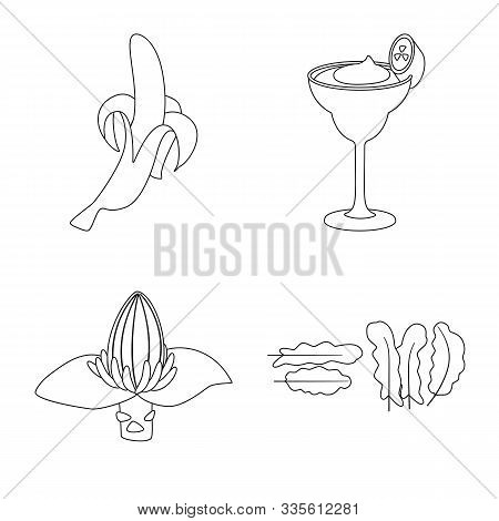 Isolated Object Of Organic And Potassium Icon. Set Of Organic And Diet Vector Icon For Stock.