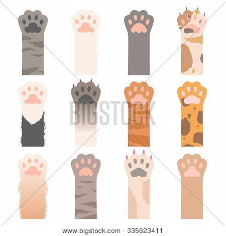 Paw Cats. Cute Animals Hands Wild Cats Claws Vector Cartoon Characters. Illustration Cat Paw, Animal