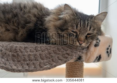 Close-up Portrait Of A Tabby Cat Sleeping On A Couch Opposite A Winter Window. The Concept Of Comfor