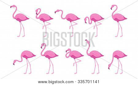 Flat Flamingo. Exotic Tropical Bird In A Flat Style. Set Of Flamingos. Exotic Animals. Cute Pink Fla