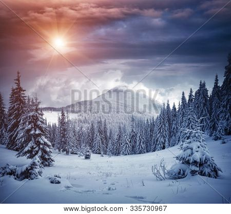 Awesome winter landscape with spruces covered in snow. Frosty day, exotic wintry scene. Magic Carpathian mountains, Ukraine, Europe. Winter nature wallpapers. Splendid christmas scene. Beauty world.