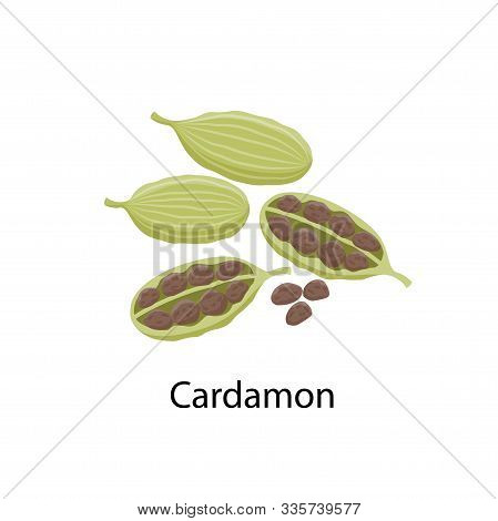 Cardamon Spice - Vector Illustration In Flat Design Isolated On White Background. Cardamom Seeds And