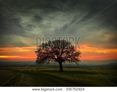 Beautiful landscape with green vegetation, a lonely big tree and a blue sunset sky with clouds, Dobrogea, Romania