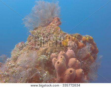 Sea Squirts On The Wreck Of The Liberty In Tulamben On Bali