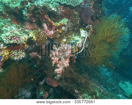 A Soft Coral Growing On The Wreck Of The Usat Liberty At Tulamben On Bali