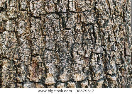 Bark Background Texture
