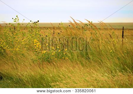 Lush Green Native Tallgrass And Wildflowers On The Windswept Prairie Taken In The Rural Flint Hills,