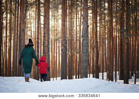 View From The Back Of The Baby And His Mother Walking In A Snowy Forest On A Sunny Frosty Winter Day