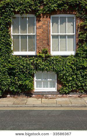 Ivy Windows.