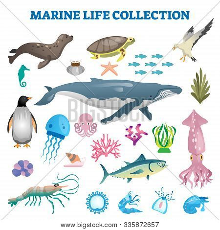 Marine Life Collection Vector Illustration. Sea And Ocean Wild Fauna Fishes. Swimming Underwater Cre