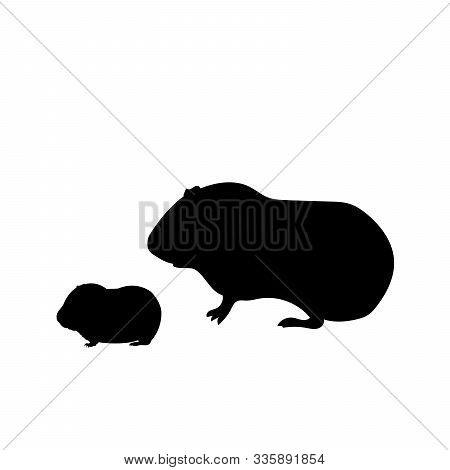 Silhouette Of Guinea Pig And Young Little Guinea Pig. Vector Illustrator