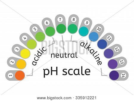 Vector Ph Scale Of Acidic,neutral And Alkaline Value Chart For Acid And Alkaline Solutions. Ph Scale