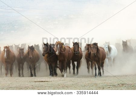 The wild horses  riding in a dusty sunset