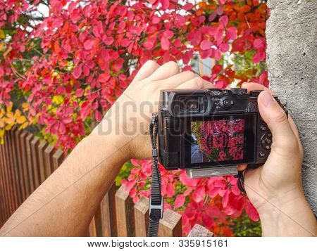 Display Of Photo Camera Shows Red Lush Foliage In Garden, Concept Of Photo And Video Making. Assista