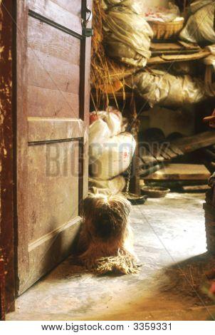 China - Dog In Doorway