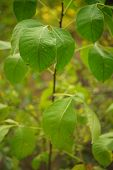 Fresh green leaves grow in the forest, soft selective focus. poster
