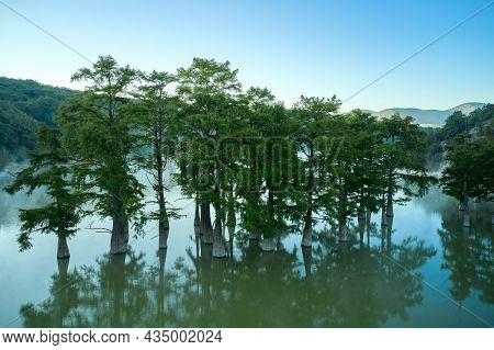 Cypress Grove In The Middle Of The Lake In The Early Morning. Shooting From A Drone. Copy Space.