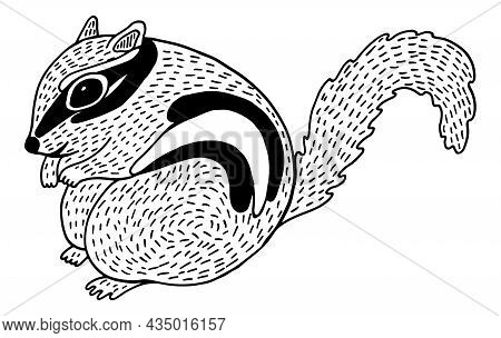 Cute Chipmunk - Line Illustration. Black And White Rodent Sketch. Freehand Drawing Of Forest Animal.