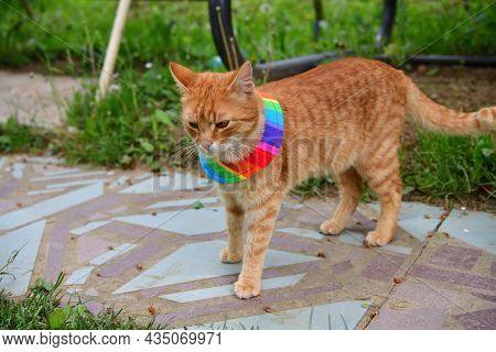 Bird Warning Cat Collar Helps Saving Birdlife In The Nature