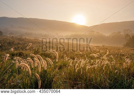 Beautiful Nature Sunrise Silhouette Flower Grass Savannah Meadow Background Landscape Mountain Thail