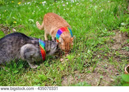 Domestic Cat Wearing Bird Warning Cat Collar Covers Around The Neck