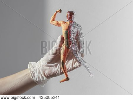 3d Skinless Human Body Model With Blood Circulatory And Muscular Systems. Anatomical Medical Concept