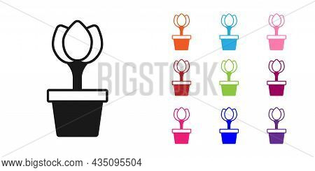 Black Flower Tulip In Pot Icon Isolated On White Background. Plant Growing In A Pot. Potted Plant Si