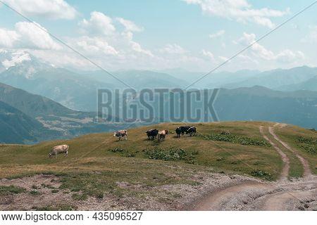 Mountain Landscape In Svaneti Region, Georgia, Asia. Cows And Snowcapped Hills In The Background. Su