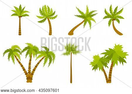 Cute Cartoon Palm Set Isolated On White Background. Exotic Trees In Flat Style. Double, Triple Palm.