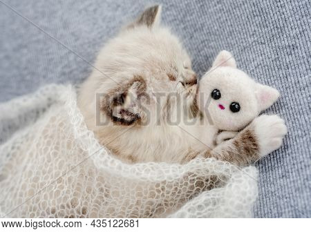 Adorable little ragdoll kitten sleeping under knitted blanket hugging toy cat on light blue fabric during newborn style photoshoot in studio. Cute napping kitty portrait