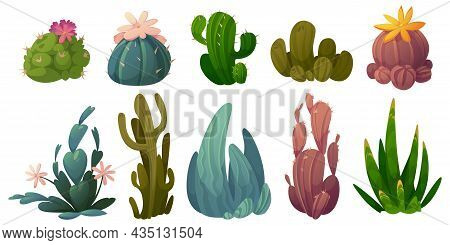 Set Of Cactus, Desert Cacti Flowers Stetsonia, Carnegia, Selenicereus And Rhipsalidopsis With Saguar