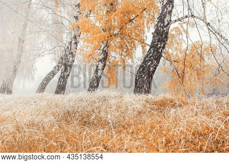 Autumnal Scenic Foggy Morning Landscape With Birch Tree Foliage And Dry Red Orange Grass In Early Mo