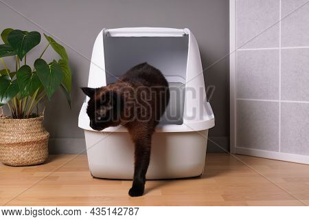 Brown Indoor Cat Stepping Out Of Closed Kitty Litter Box In Living Room