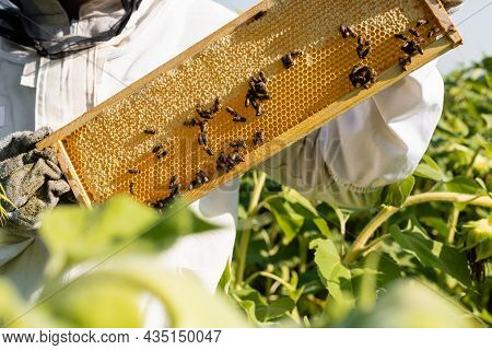 Partial View Of Apiarist Holding Frame With Honeycombs And Bees On Blurred Foreground