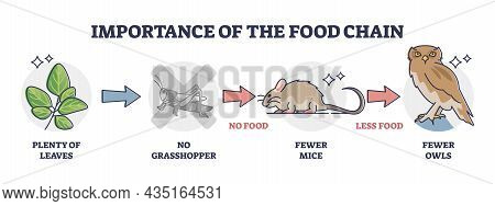Importance Of Food Chain As Lack Of Animal Nutrient Situation Outline Diagram. Labeled Educational C
