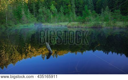 Tranquil Nature Background Landscape Of Morning Lake Fog And Sunken Snag Of Tree In Water With Refle