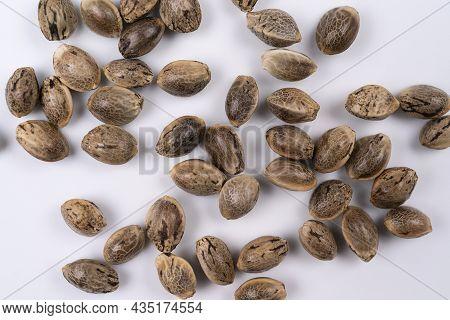 Cannabis Hemp Seeds Close Up Macro Shot Isolated On White Background, Top View Macro Hemp Seeds