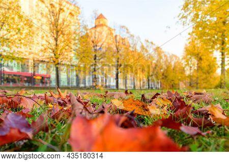 Colorful Foliage Among The Trees