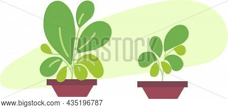 Green Potted Plants. Indoor Green Abstract Plants Modern Flat Colored Vector Design. 2d Plants Simpl