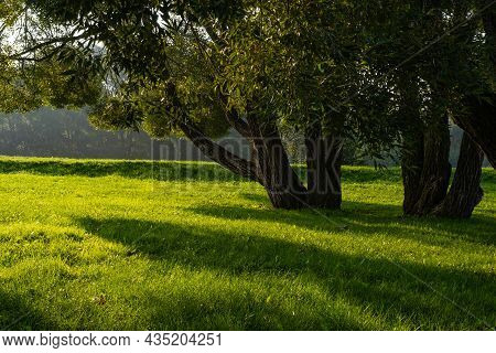 Sunlight And Shadows From A Tree In A Green Clearing In The Early Quiet Morning.