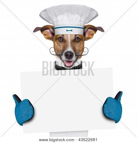 a cook dog holding an empty placard poster