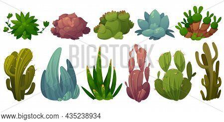 Set Of Cactus, Desert Cacti Flowers Opuntia, Monilaria, Cotyledon, Echeveria Colorata, Echeveria Aga
