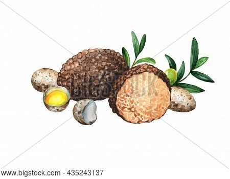 Quail Eggs Truffle Watercolor.illustration Isolated On White Background