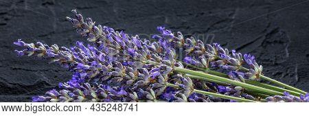 Lavender Flower Panorama On A Black Background. Aromatic Herb. Lavandula Panoramic Banner